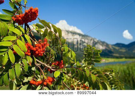 Rowan In Tirol