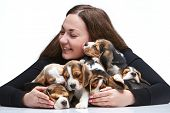 foto of puppy beagle  - The happy  woman and big group of a beagle puppies on white background - JPG