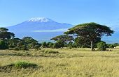 stock photo of kilimanjaro  - Mount Kilimanjaro in Kenya Amboseli National Park - JPG