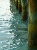 picture of jetties  - Pine poles of jetty in Maldives sea - JPG