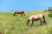 foto of horses eating  - Horses standing on a hill eating grass - JPG