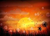 picture of dragonflies  - silhouette of dragonfly with sunset - JPG