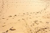 foto of footprints sand  - close up shot of the clean sand on a tropical island with footprints - JPG