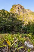 foto of jungle exotic  - a tropical and lush jungle on an exotic island called Phi Phi leh Thailand - JPG