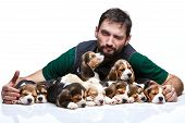 foto of puppy beagle  - The winking man and big group of a beagle puppies on white background - JPG