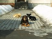 stock photo of herding dog  - A flock of dogs got to bask in the sun on a cold winter day - JPG