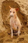 stock photo of stray dog  - thai stray dog lying on sand floor - JPG