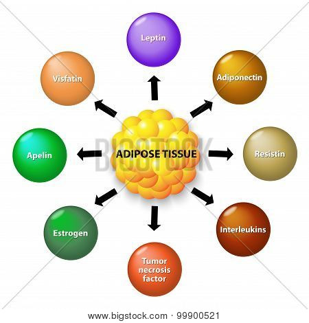 Adipose Tissue And Hormones