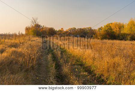 Road to abandoned hamlet in Sumskaya oblast Ukraine