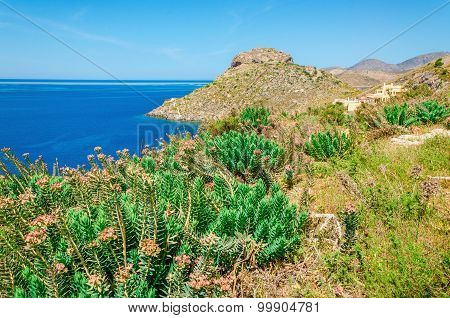 Greek sea bay with grass and bushed , Kos, Greece