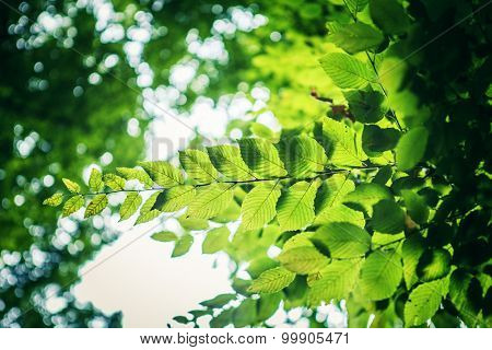 forest trees leaf. nature green wood sunlight backgrounds