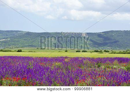 Salvia Landscape