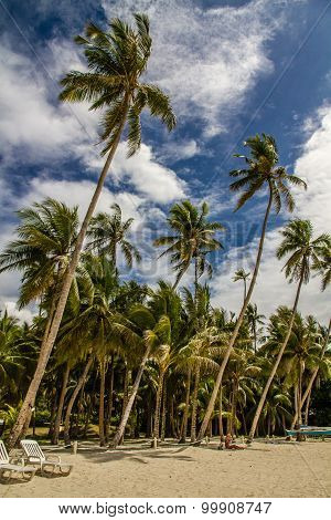 Tranquil Alona Beach With Palm Trees, Philippines
