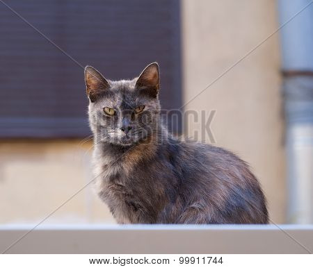 Gray And Red Stray Cat Sitting On Wall Background