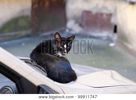 Black And White Stray Cat Sitting On Car