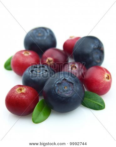 Bilberry And Cranberry