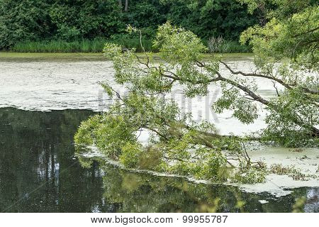 Branches Of Trees On A Water
