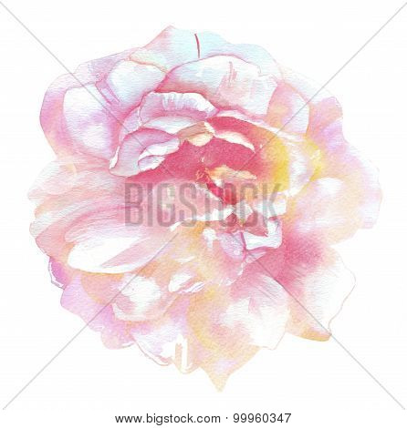 A vintage style watercolour drawing of a rose in tender tones on white background
