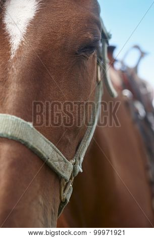Horse Head Detail With Blue Sky Background
