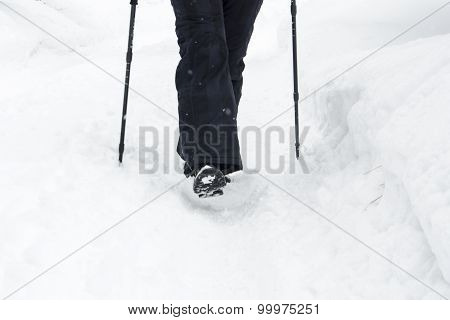 Winter Mountain Nordic Walking Accesories