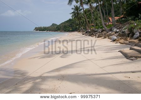 The Beach Under Palm Trees