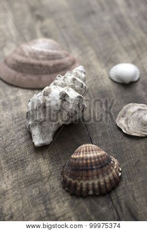 Sea Shells On Old Wooden Plank