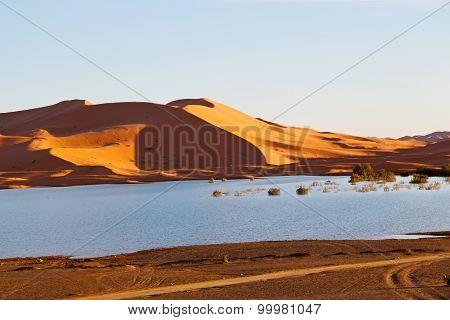 Sunshine In Th  Yellow  Desert  And     Dune