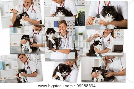 Photo Collage Of A Veterinary Clinic