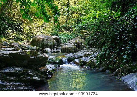Marvellous mountain stream among southern forests