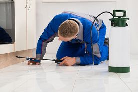 picture of pesticide  - Male Worker Kneeling On Floor And Spraying Pesticide On Wooden Cabinet - JPG