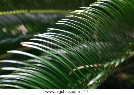 Delicate Palm Leaf