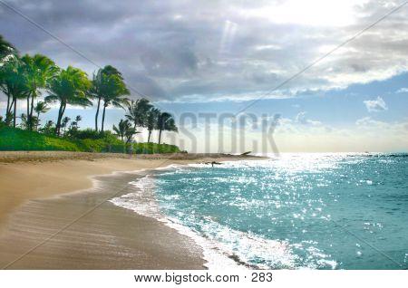 Kauai Shore